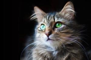 lisa's cat face (1)
